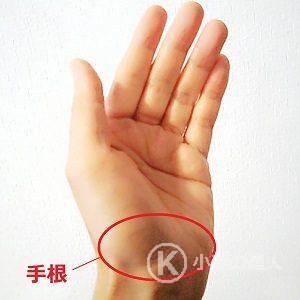 手根の画像