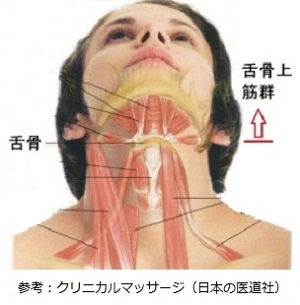 舌骨上筋群の画像