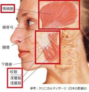 咬筋と側頭筋の画像