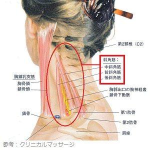 斜角筋の画像