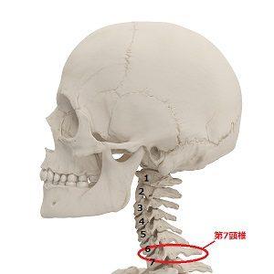 第七頸椎の画像
