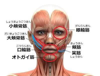「大頬骨筋(だいきょうこつきん)小頬骨筋(しょうきょうこつきん)頬筋(きょうきん)口輪筋(こうりんきん)笑筋(しょうきん)」の画像検索結果