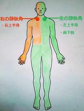 左右のリンパの流れの画像