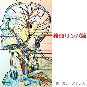 後頭リンパ節の画像(1)