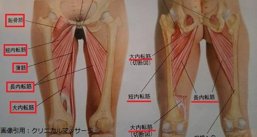 股関節内転筋群の画像