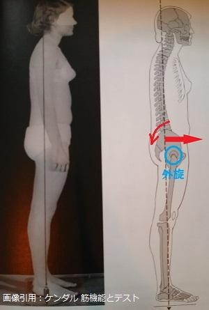 骨盤前方移動と骨盤後傾による股関節外旋の画像